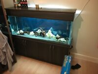 5 FT Fish Tank set up complete