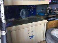 4ft Fish Tank, sump & stand