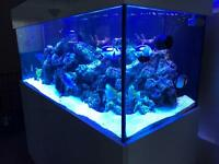 650 Litre Marine aquarium for sale full system fish and live rock £3500.00