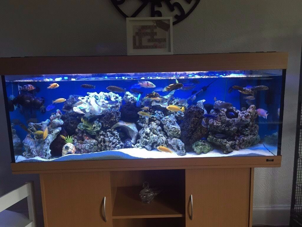 5 ft jewel rio 400 450 litre fishtank with beechwood. Black Bedroom Furniture Sets. Home Design Ideas