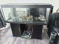 5ft Fish Tank and Cabinet