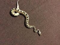 Python for sales