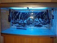 Aquarium 240 litres.