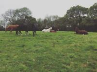 Retirement / assisted grass horse livery Shipley, West Sussex