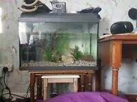 Fish tank no stand