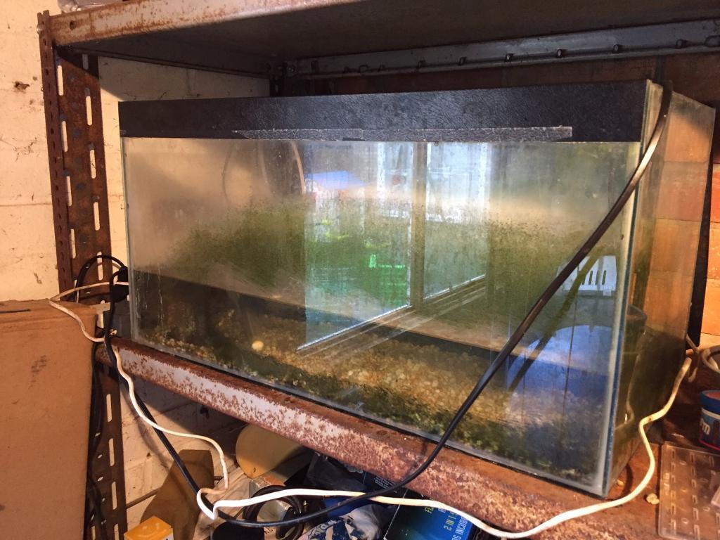 Aquarium fish tank northamptonshire - Fish Tank For Sale