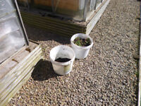Grow buckets, mostly with soil compost mixture, no longer required