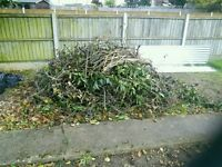 Kindling - Free to collect