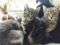 Beautiful lovely kittens