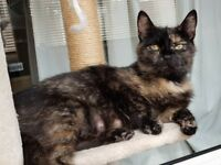 2 Female cats in need of a new lovely home