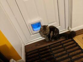 Sureflap Cat Flap with Microchip Identification