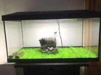 Fish tank 60-70l with all equipment