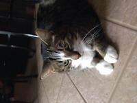 Free male tabby to good home