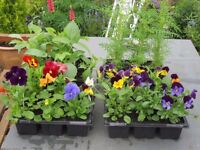 Bedding plants, Basket/Pot plants and Perennials. Baskets and Wall Racks planted. Delivery Available