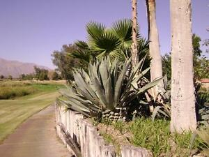 Lawrence Welk Desert Oasis Palm Springs CA area.