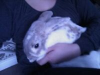 Female rabbit (4 years old) & cage £55