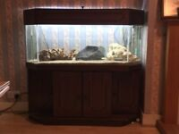 4ft fish tank with angled sides & cupboards. Accessories included. Very good condition Was £1k new