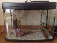 Fish tank ready set-up.