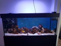Marine tank 5ft by 2 ft by 3 ft 500 litres