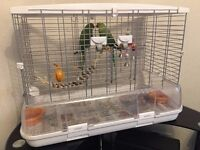 2 Indian Ringnecks with cage and toys
