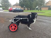 Dog Mobility Wheel Chair - Large