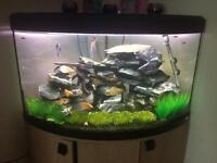 Fluval Aquarium in excellent condition..