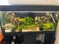 Tropical tank for sale with live stock