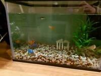 Fish tank with 3 fish