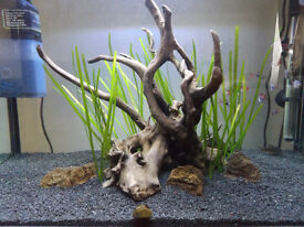 Fish tank and stand set