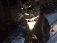 Cat needs rehoming