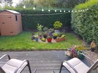 Short term single room in lovely house with dog & garden:)