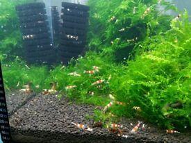 85 liters , opti white fish tank