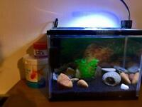 Small fish tank with fish
