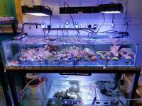 Marine and freshwater led lights
