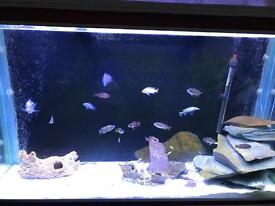 Fish tank for sale 4ft by 2ft by 2ft in mint condition