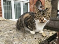 FOUND small tabby cat in Peckham