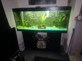 Jewel rio 450l tanks and stand