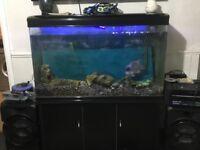 4 ft Tank Full Set up