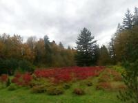 Beautiful Cedar trees and more!!! Japanese Maples also