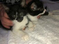 kittens ready!
