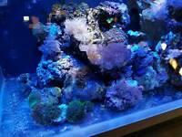 Fluval M60 Marine aquarium full setup