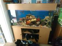 Complete fish tank with fish and stand