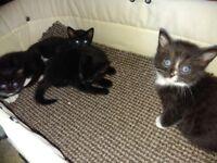 Kittens 4X..