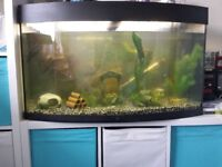 Juwel vision 180 fish tank set up