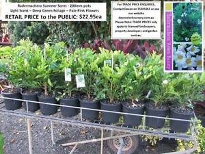 Need PERFUMED Plants in Your Garden?  Visit Us!  HS100 Mudgeeraba Gold Coast South Preview