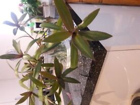 healthy houseplant with nice container