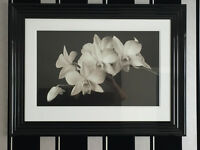NEXT BLACK FRAMED PHOTOGRAPH OF WHITE LILLIES
