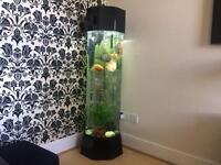 FISH TANK £400 O.N.O.