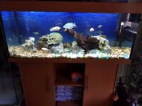 Juwel 240l aquarium with fish