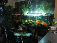 Today big sale for tropical fish